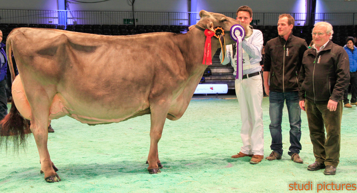 Swiss Expo Brown Swiss-238